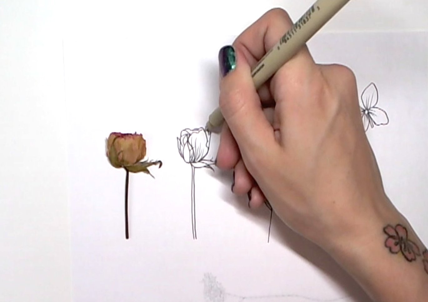 Traditional Flower Line Drawing : Botanical line drawing peggy dean skillshare